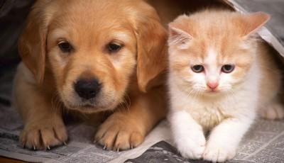 quien nos quiere mas los gatos o los perros