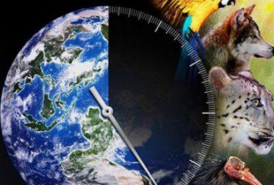 la tierra experimenta la 6ta extincion masiva